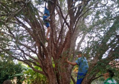 Bosque Santo André